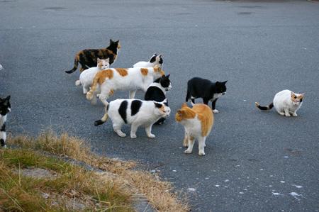 catss.jpg