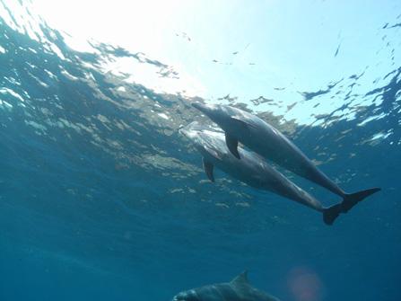 toshima_dolphin01.jpg
