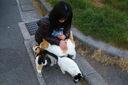 yossy_cats.jpg