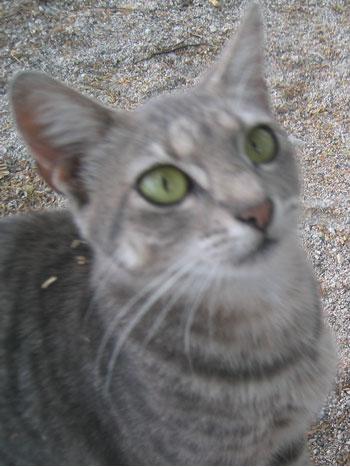 honaunau_cat.jpg