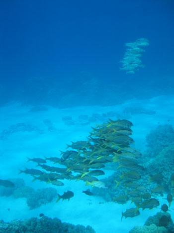 alohafish.jpg