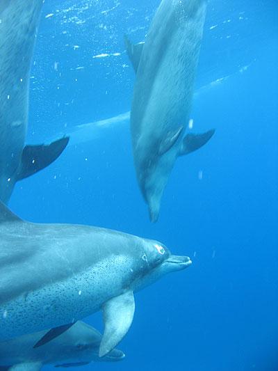 oga_dolphin13.jpg