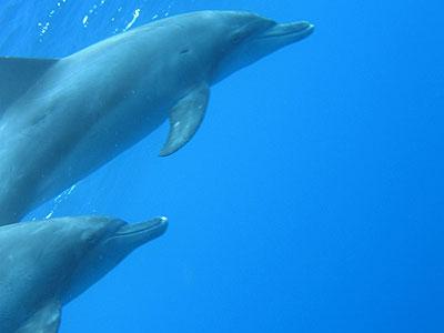 oga_dolphin18.jpg