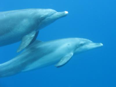 oga_dolphin34.jpg