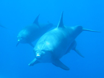 oga_dolphin35.jpg