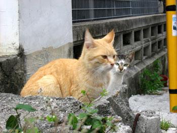 okinawa_cats.jpg