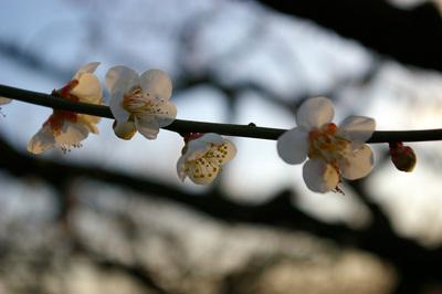 plumflower.jpg
