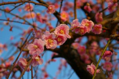 plumflower1.jpg