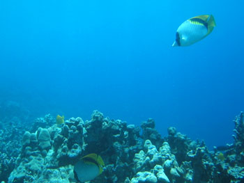 underwater10.jpg